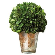 Perserved Ball Topiary in Vase  at Joss and Main