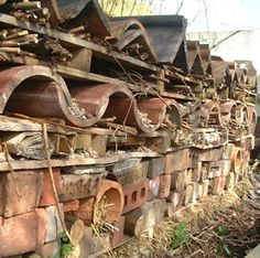 Need to build some insect houses ...