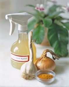 Natural Pest Repellent with onion, garlic, cayenne and water; keeps 1 week in refrigerator. | Martha Stewart.  Note: Why not add some drops of dishwashing soap liquid for good measure!!!