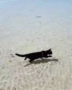 Cat's on making profound choices in life live awesomely.On masked insecurities. Cat's on making profound choices in life live awesomely. Funny Animal Videos, Cute Funny Animals, Cute Baby Animals, Animals And Pets, Cute Cats, Funny Cats, Beautiful Cats, Animals Beautiful, Kittens Cutest