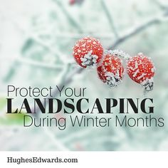 What can you do to protect your landscaping this winter and ensure that your hard work this summer wasn't for nothing? Read today's blog.
