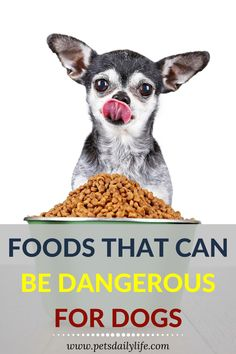 Do you know that some foods are dangerous for dogs? Here are some of them you should never feed your dog | Dangerous Foods for Dogs | Dog Foods | Food for Dogs | Toxic Foods For Dogs, Dangerous Foods For Dogs, Dog Care Tips, Pet Tips, Dachshund Facts, Dog Health Tips, Dog Nutrition, Sick Dog, What Dogs