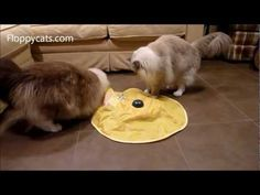 Cat Teaser Toy The Undercover Mouse Or Cats Meow Interactive Floppycats