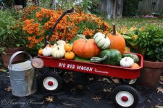 Fall plans for my little red wagon the kids don't use anymore. : )
