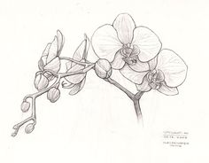 Orchid Sketch | Orchid sketch | Flickr - Photo Sharing!