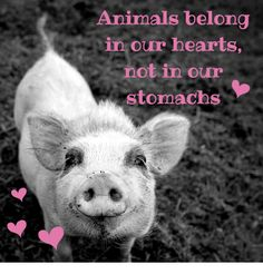 animals with hearts images - Google Search