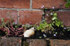 Gardening therapy: for body, hands and mind, and a garden giveaway