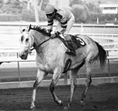 Great Lady M(1975)(Filly) Icecapade-  Sovereign Lady By Young Emperor. 3x5 To Nearco, 4(C)x5(F)x5(F) To Hyperion. 58 Starts 14 Wins 9 Seconds 7 Thirds. $332,008. Won A Gleam H, La Brea S, La Cienegas H, Rancho Bernardo H, Autumn Days H, Orange Coast H, Mission Viejo S, 2nd A Gleam H, Autumn Days H, 3rd Morvich H, Las Flores H. Dam Of Lady's Secret.