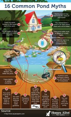 16 Common Pond Myths (infographic) - My Backyard Now Outdoor Ponds, Ponds Backyard, Garden Ponds, Pond Landscaping, Backyard Waterfalls, Outdoor Fountains, Turtle Pond, Diy Pond, Pond Fountains