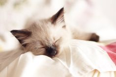 {Sleeping Kittens} Is there anything cuter /// Tasnim Photo