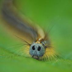 bad hairday by trui Heinhuis on 500px