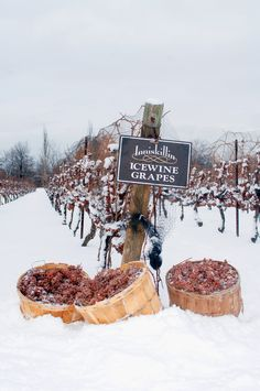 *Inniskillin Ice Wine Vineyard