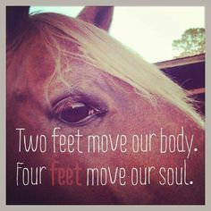 The horse: two feet move our body; four feet move our soul.