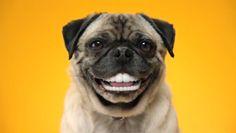 Healthy Teeth are Happy Teeth!