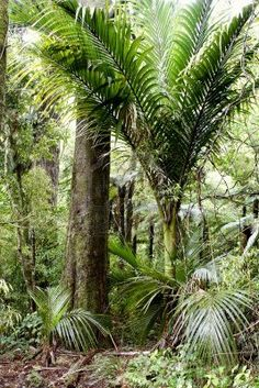 Lush foliage in tropical jungle
