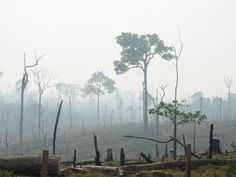 During the last half century, the seemingly endless Amazon has lost at least 17 percent of its forest cover, according to WWF. Shown here, a burnt Amazon forest.