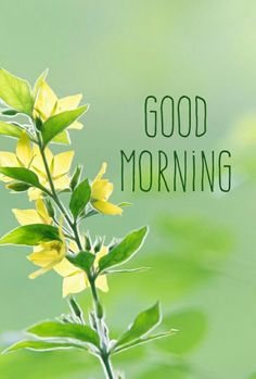 Good morning picture with beautiful flower and fresh background. Good Morning Beautiful Flowers, Good Morning Roses, Good Morning Images Flowers, Good Morning Cards, Good Morning Gif, Good Morning Messages, Morning Pictures, Morning Wish, Happy Morning