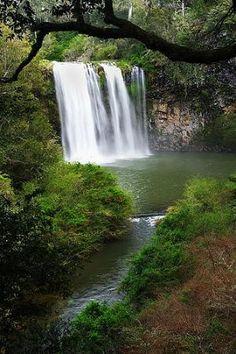 Dangar Falls, Dorrigo, NSW, Australia