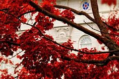 Nauvoo Red Leaves by Robert A. Boyd. This guy has some of the most beautiful photographs of the LDS temples I have ever seen!
