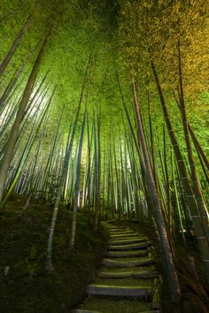 Bamboo Path, Kodai-ji Temple, Japan, 2012  Christie's Boundless: 125 Years of National Geographic Photography www.christies.com/natgeo Estimates starting at $400