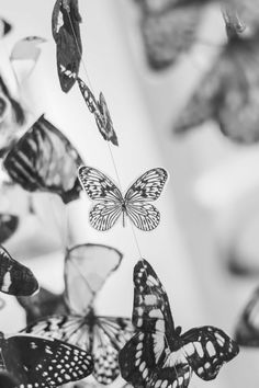 Download this free photo from Pexels at https://www.pexels.com/photo/butterflies-black-and-white-9159 #black-and-white #decoration #decor