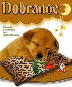 Dog Food Recipes, Night, Pets, Polish, Pictures