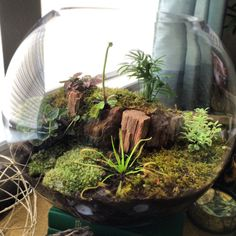 DIY terrarium.  Bottom layer about 1-2 inches gravel, second add thin layer activated charcoal, third layer add about 4 inches soil.  Then add plants and finally add moss.  This is a high humidity terrarium so I keep it sealed with saran wrap.  Make sure you pick plants that have the same care requirements, some like it moist, some a little more dry, other wise some will suffer! Finally spray mist with DISTILLED water only!  I added 2 carnivorous plants, the Venus Fly Trap and the Octopus…