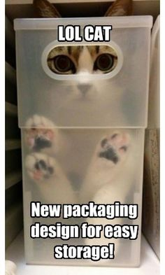 Lol Cat. New packaging design for easy storage! #catoftheday