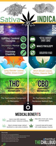 Cannabis Sativa vs Indica Infographic