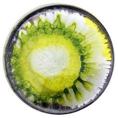 The Daily Dish - Klari Reis. Painted petri dishes.