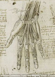 Remarkable accuracy: A forthcoming exhibition will compare Leonardo da Vinci's anatomical drawings with the latest modern medical scans and models to show just how true to life the artist's work was.