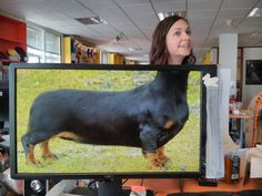 These Coworkers are Adding their Heads to Animals on Each Others Desktop Backgrounds