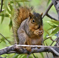 Wild Life, Animals, Animales, Animaux, Wildlife Nature, Animal, Animais