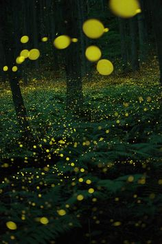 lifeisverybeautiful:  Firefly, Japan