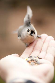 Friendly Bird (by NYBG).