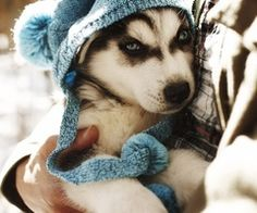 Things that warm my heart and make me smile #siberianhusky
