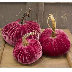 Rachel Ashwell Velvet pumpkins!