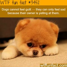 Dogs feel sad because of the energy their owner emit thus the reactions they give whether you're yelling or not