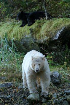 Best Canadian Wilderness Lodges; Spirit Bear Lodge #2
