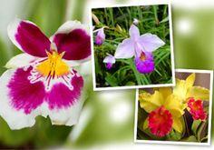 Orquídeas: principais espécies e segredos para cuidar das flores e montar um orquidário