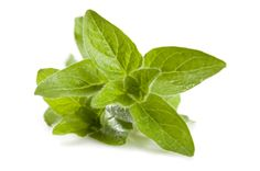 Wild mountain oregano oil has a healing effect against the H. pylori bacterial infection