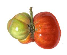 <strong>Sir. Lung</strong> <small><em>A portrait of a heirloom tomato </em></small>  14 x 11