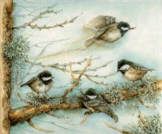 illustrazione di cince bigie alpestri