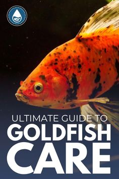 Goldfish Care, Goldfish Types, Goldfish Aquarium, Aquarium Set, Goldfish Pond, Best Starters, Garden Ponds, Pet Fish, Live Plants