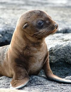 Bucket list item: see the amazing wildlife of the Galapagos Islands.
