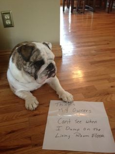 """Thinks my owners can't see when I dump on the living room floor."" —Rooney the bulldog."