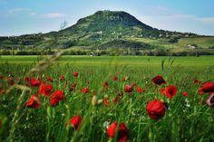 Csobánc hegy   Országalbum A Csobánc a Balaton-felvidéki tanúhegy-hármas utolsó eleme. A tanúhegy-hármas: Badacsony, Szent György-hegy, Csobánc. A Csobánc a legkisebb közülük, de csupasz lapos teteje lévén erről a legszebb a kilátás. Heart Of Europe, Hungary, Cool Pictures, Vineyard, Mountains, Landscape, Country, Outdoor, Beautiful