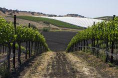 Talley Vineyards - Arroyo Grande, CA | Photographer: Steven Williams | www.theadventureduo.com