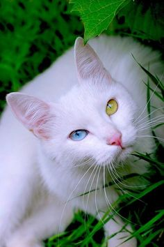 How much prettier can a cat photo get than this