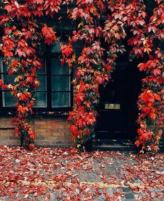 "Gefällt 5,457 Mal, 78 Kommentare - Pretty Little London (@prettylittlelondon) auf Instagram: ""Did someone say Autumn?  Photo by @yaroslava_kirichok #redleaves #autumnvibes…"""